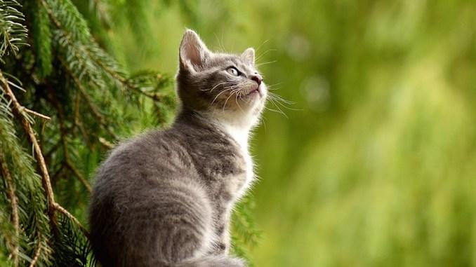 katze-miaut-komisch