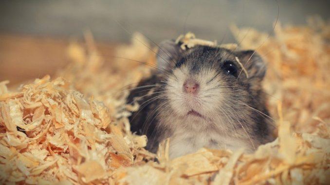 Lustige Namen fuer Hamster