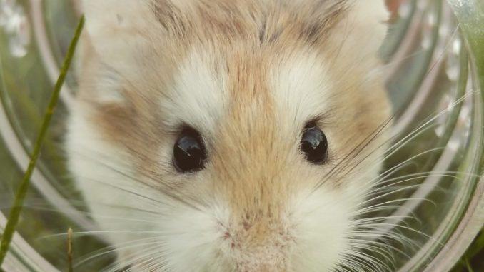 trixie laufraeder fuer hamster