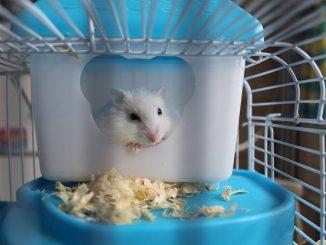 Doppelkäfig für Hamster