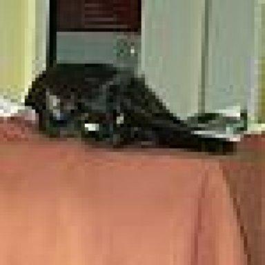 Ungewöhnliche Frage Katzen Und Sofabezug