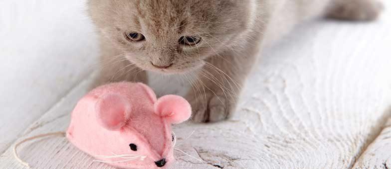 Grundausstattung Für Die Katze Mit Checkliste Tierisch Wohnen