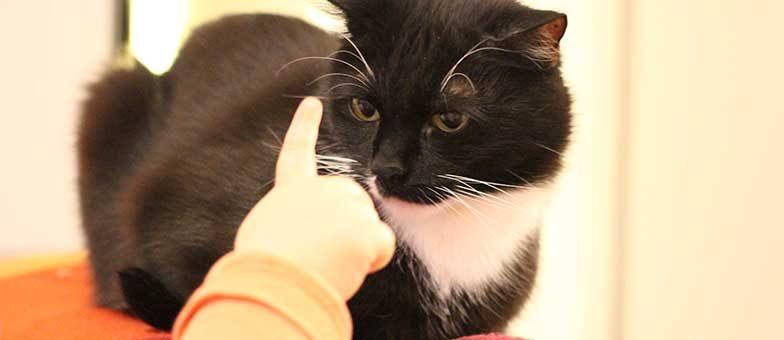 Katze Und Baby 7 Tipps Fürs Erste Jahr Tierisch Wohnen