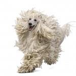 Welcher Typ Hund ist dein Hund (Alle vier Typen) (1/4)