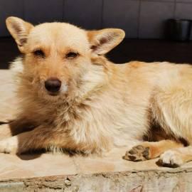 Hund Diana wird schmerzlich vermisst – Hund entlaufen  – PLZ 92278
