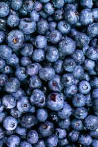 close up photo of blueberries
