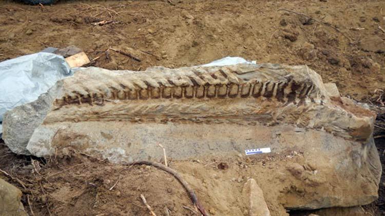 Salamander Metoposaurus algarvensis