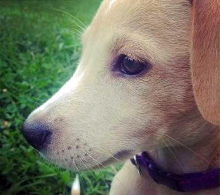 El Perro más triste