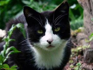 Gato misterioso rescata un turista lesionado