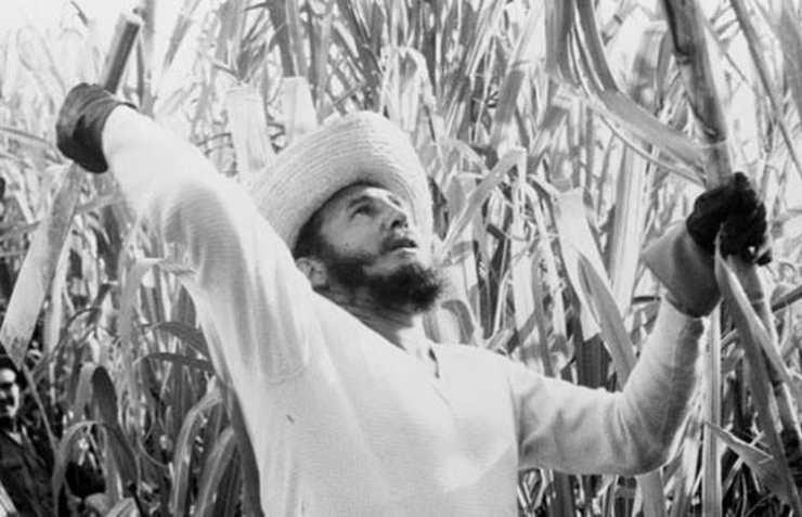 Fidel Castro cortando cana