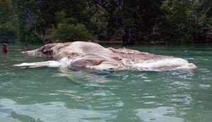 Qué es el monstruo de 22 metros hallado en Indonesia?