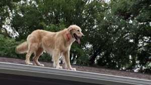 El Perro en el tejado ¿Por qué siempre está ahí?