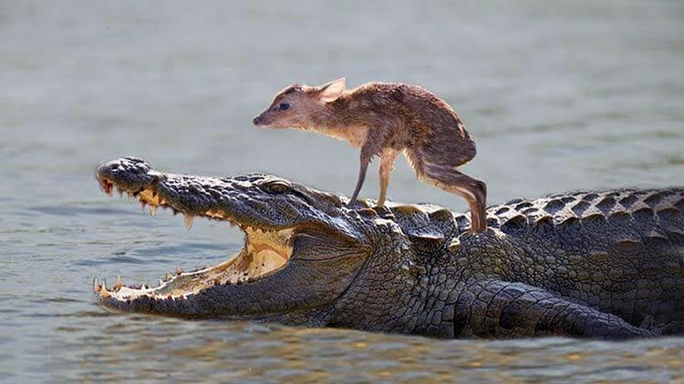 Animales que salvan animales ¿Es posible que sientan amor por otras especies?
