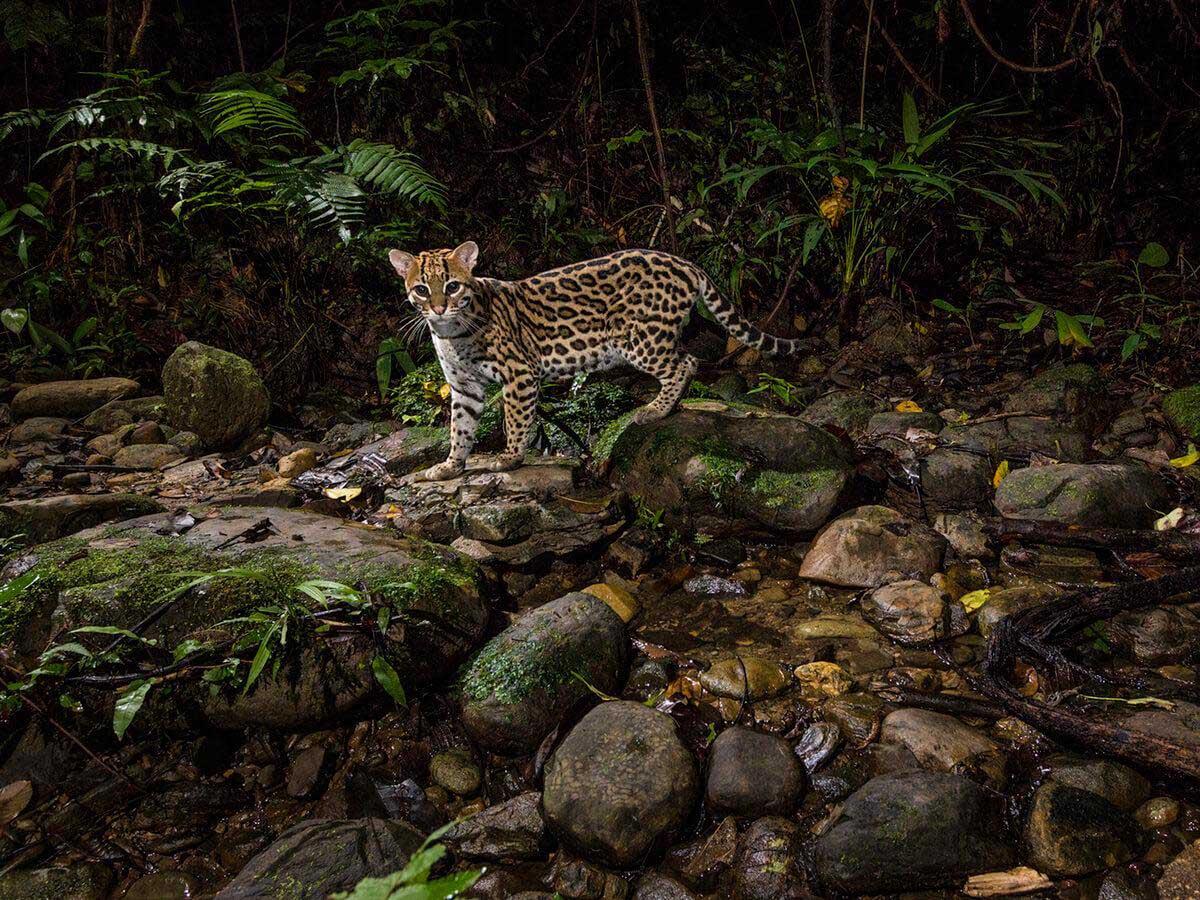 نتيجة بحث الصور عن peru jungle