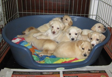 all-the-puppies