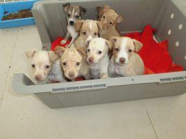 Tonys puppies 1