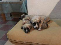 Dogos und seine Brüder 2