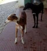 Chanel und Bolt 1