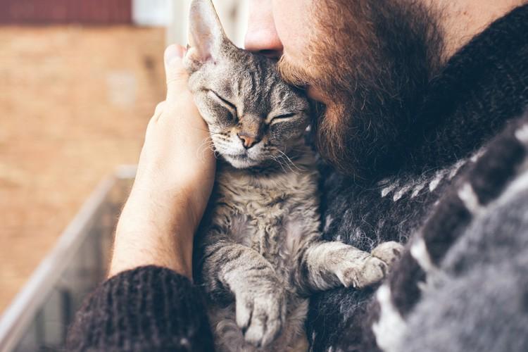 Die Kastration Von Katzen Das Musst Du Wissen
