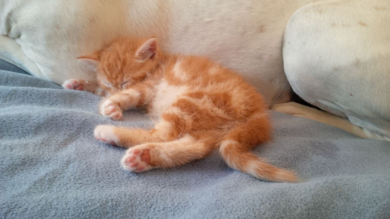 Handaufzucht Katzenbaby Gizmo