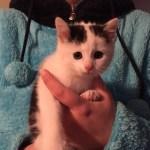 Katzenbaby Delia