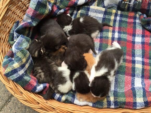 8 Katzenbabys Zwerge
