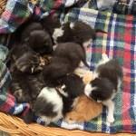 8 Katzenbaby Zwerge