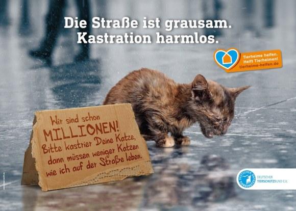 Katzenelend – Leid der Straßenkatzen