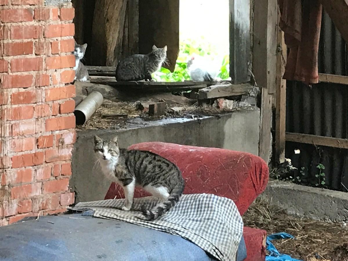 Katzenelend in Eichenried