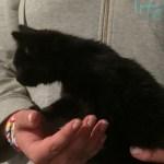 Katzenbaby Lola