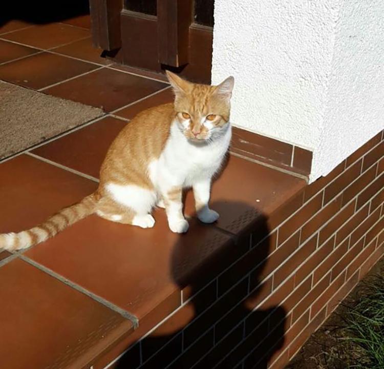 Katze Socke aus Flieden vermisst