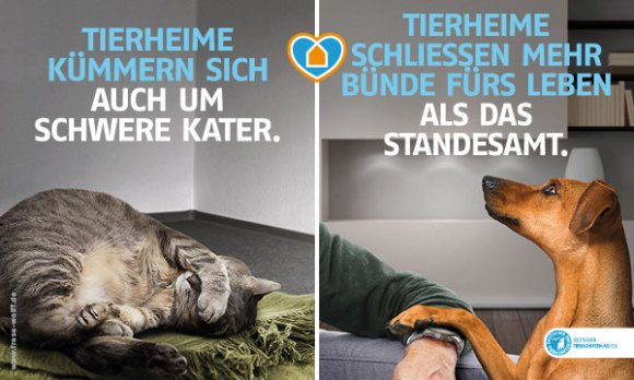 Tierschutzvereine Helfen