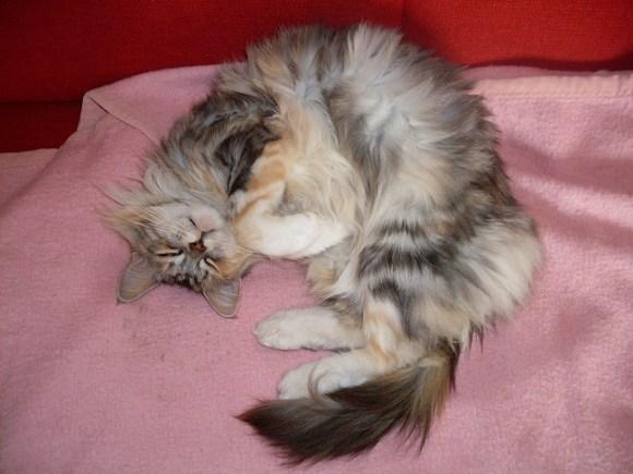 Katze Tinka vermisst
