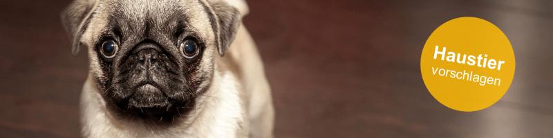 Haustier_vorschlagen