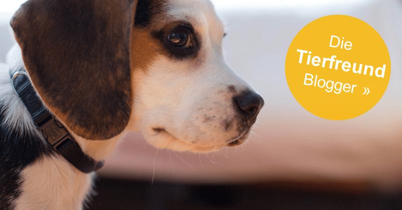 Tierverzeichnis 24: Tier Webkatalog und Tierseiten