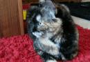 Schildpatt: Luna die Schnelle