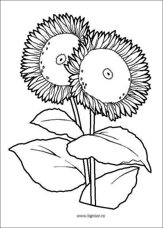 Plansa De Colorat Cu Floarea Soarelui Tigrisorro