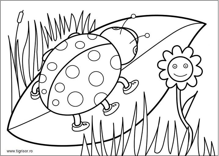 Turtita Fise De Colorat