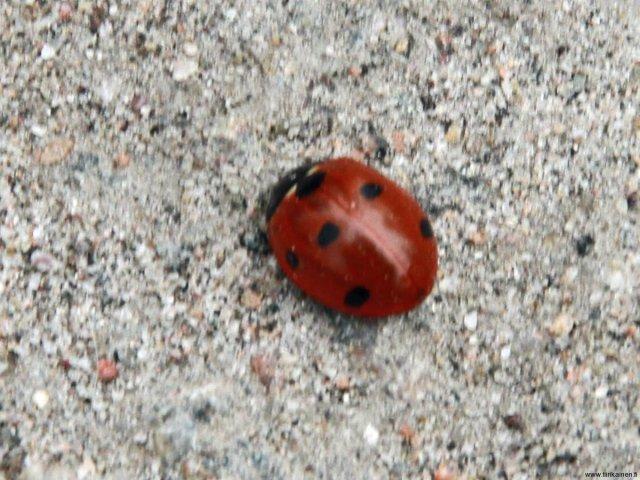 18-04-2013-april-first-ladybug