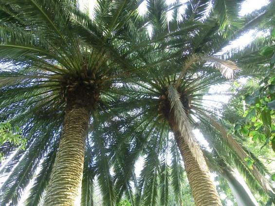 Palmkronen