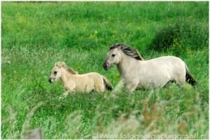 Paarden TAO copy