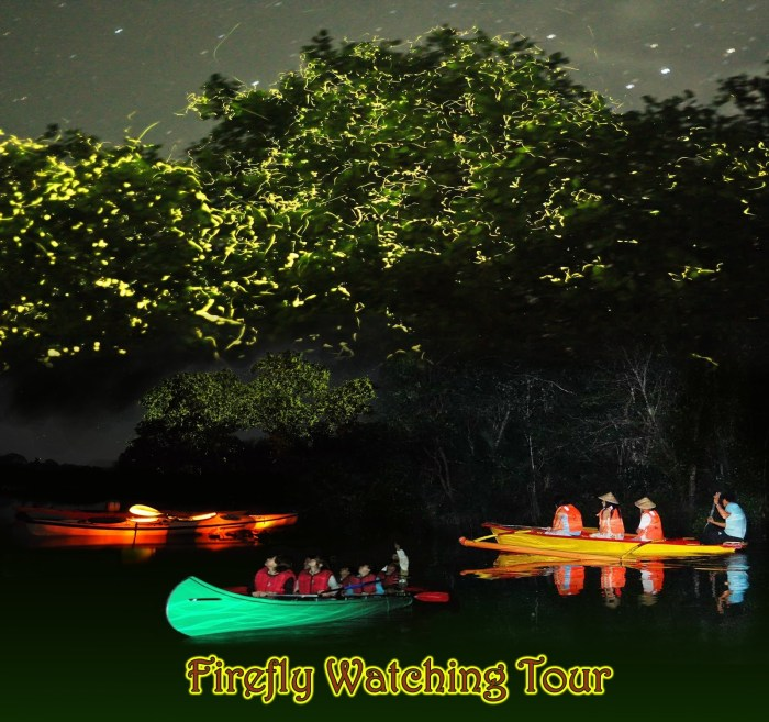 Firefly Watching by TripPartner Travel and Tours