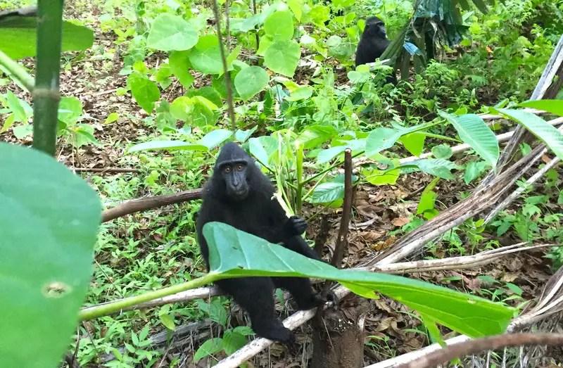 coolest_monkey