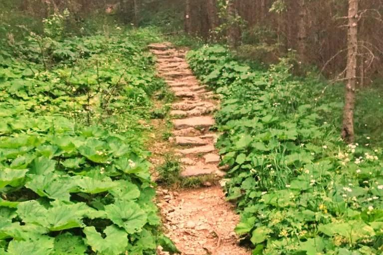 trails in zakopane