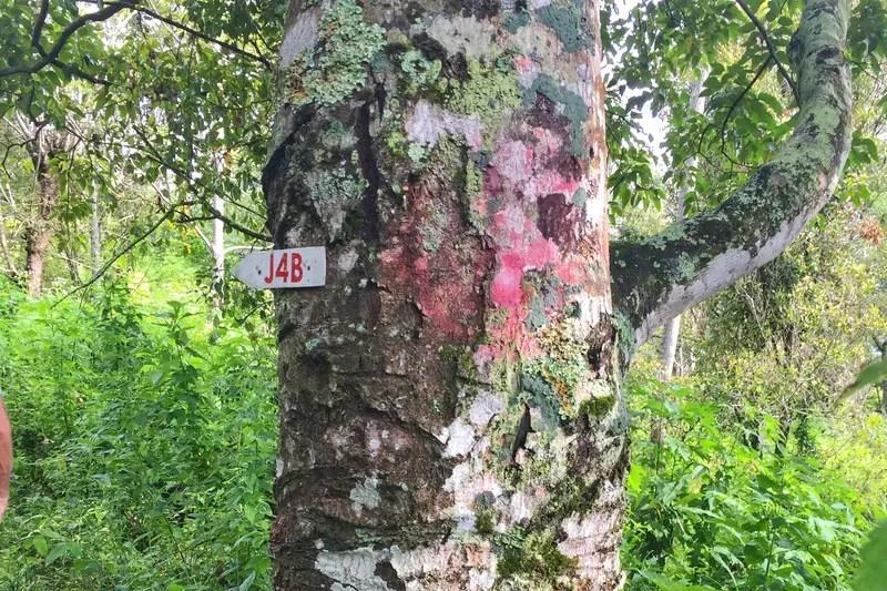 trail markers lake toba