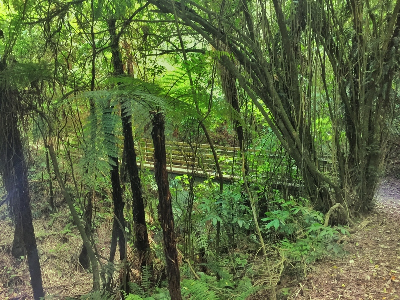 manawatu gorge walkway