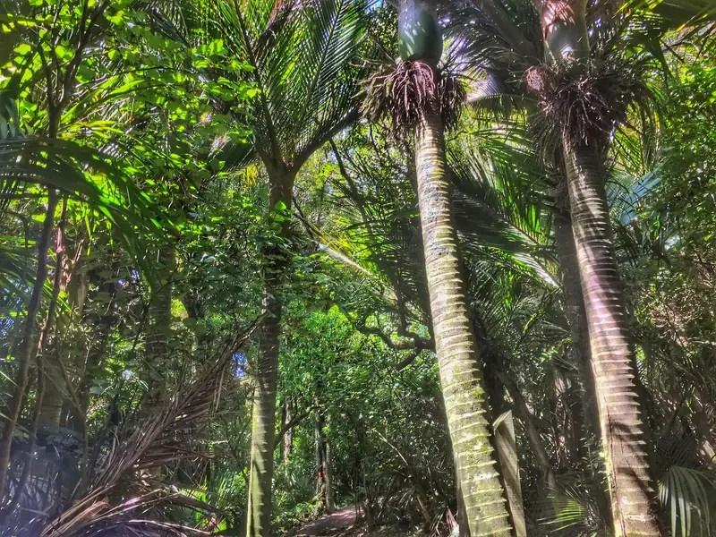 tararua trees