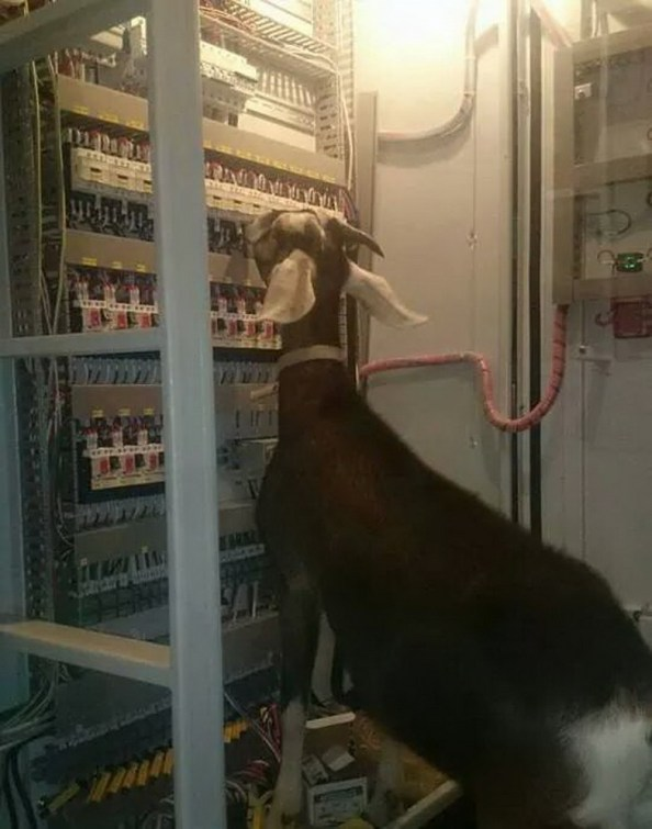Your Server Admin is a Goat Your Server Admin is a Goat