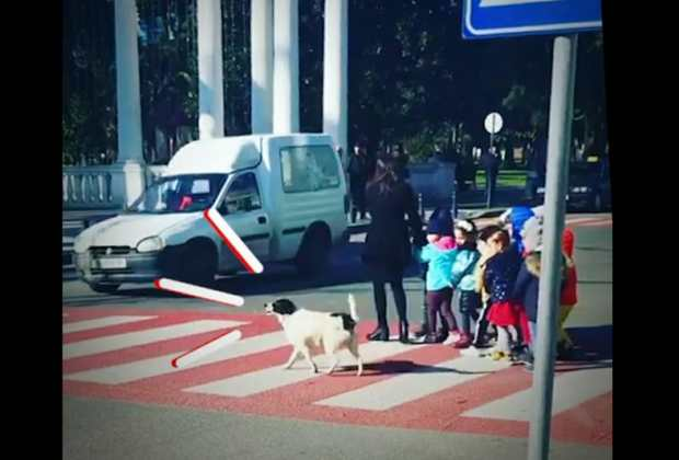Anjing Liar yang Tiap Hari Setia Bantu Seberangkan Anak Sekolah ini Punya 12 Ribu Pengikut di Instagram