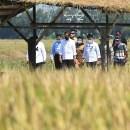 Di Tengah Isu Reshuffle Kabinet, Jokowi Kunker ke Jabar-Jateng